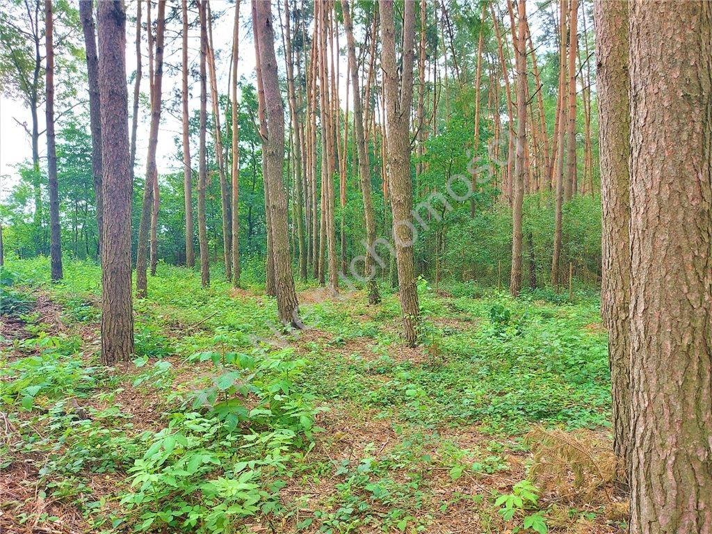 Działka rekreacyjna na sprzedaż Drożdżówka  1427m2 Foto 2