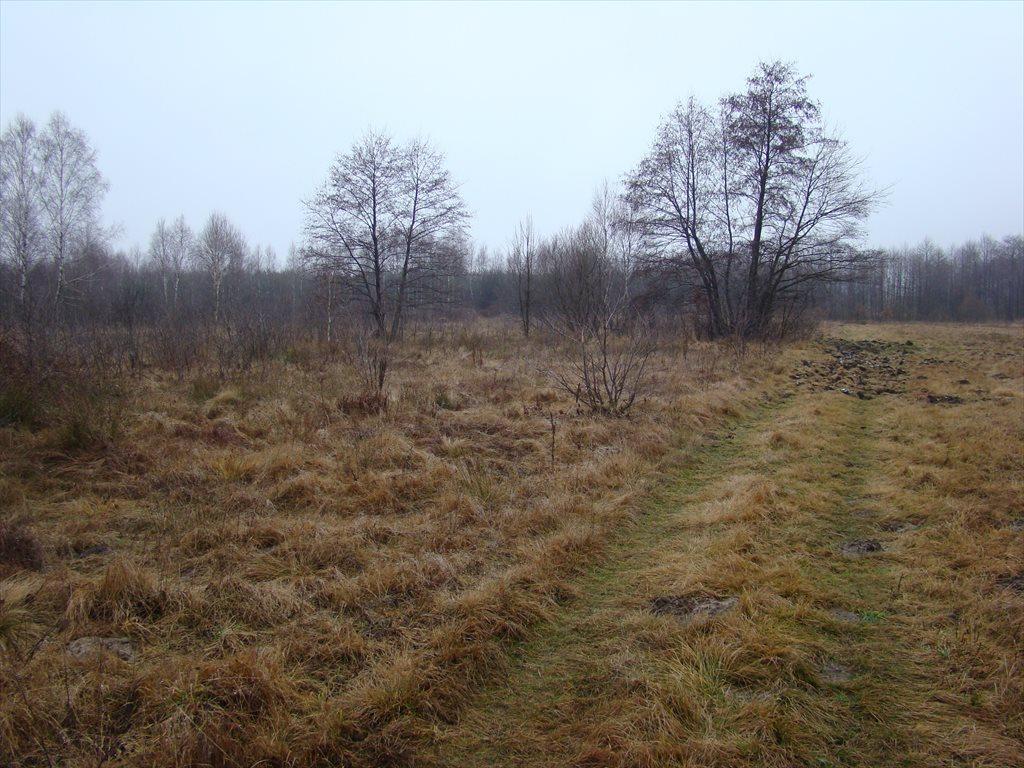 Działka siedliskowa na sprzedaż Tomaszew, okolice Żyrardowa, okolice Żyrardowa  16200m2 Foto 5