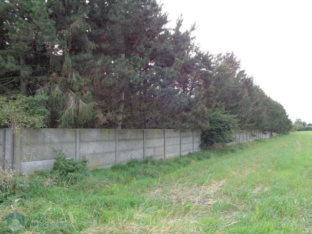 Działka budowlana na sprzedaż Błaszki  3000m2 Foto 4