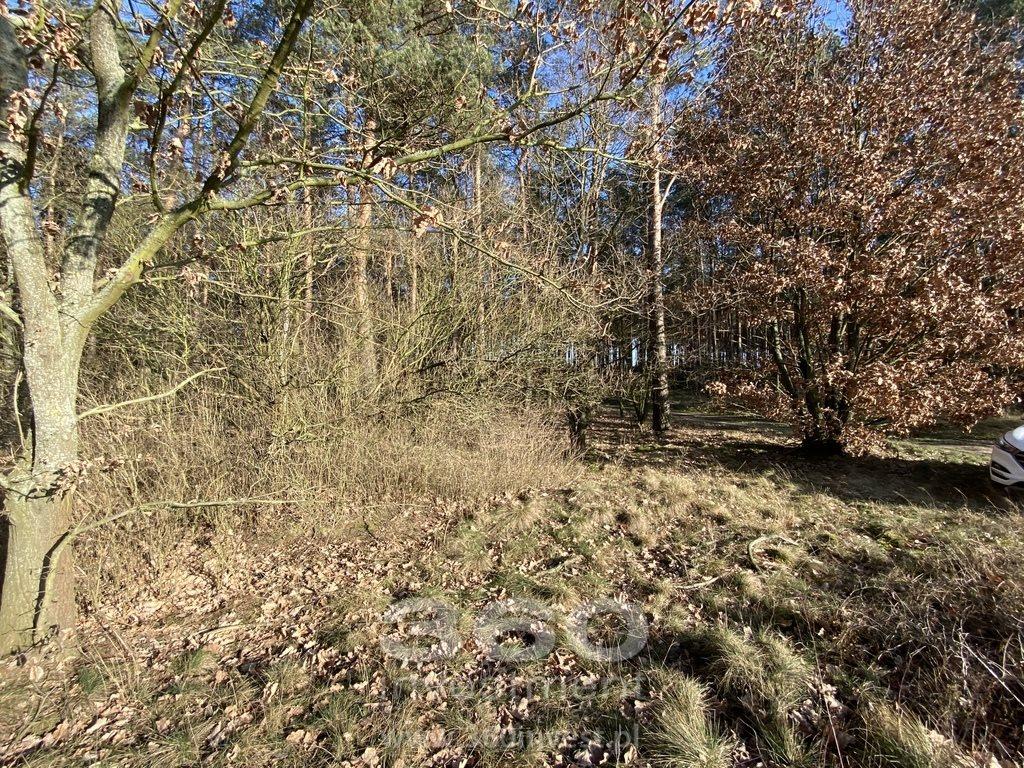 Działka leśna na sprzedaż Słonów  10800m2 Foto 4