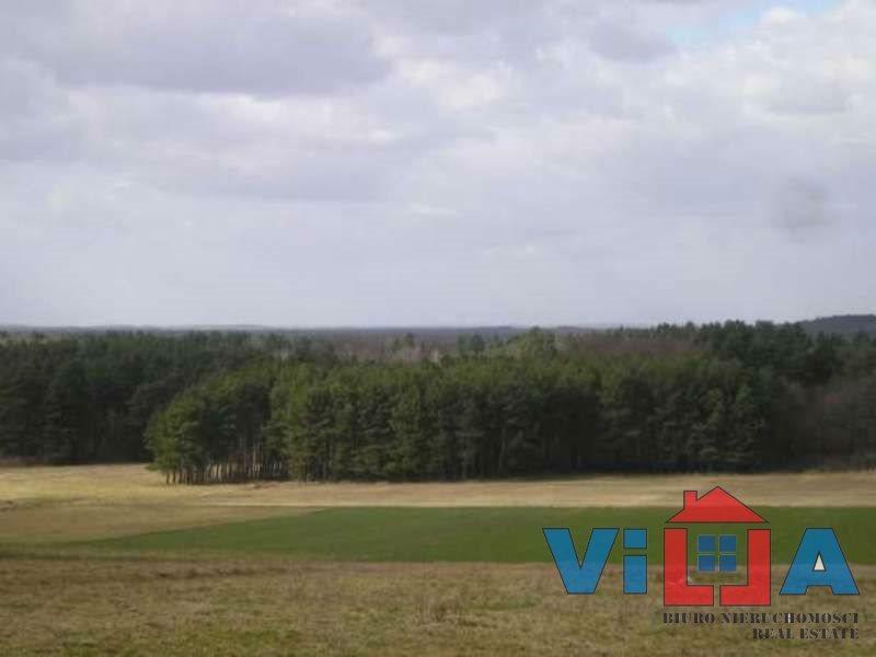 Działka rolna na sprzedaż Dłużek  8900m2 Foto 3