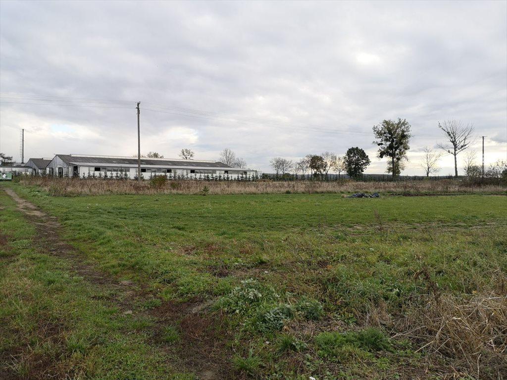 Działka budowlana na sprzedaż Mątowy Wielkie  3587m2 Foto 12