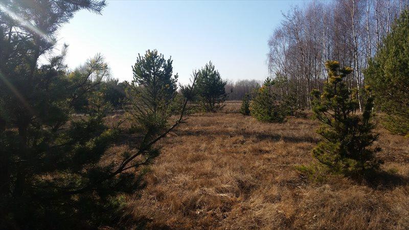 Działka rolna na sprzedaż Mariew  1500m2 Foto 10