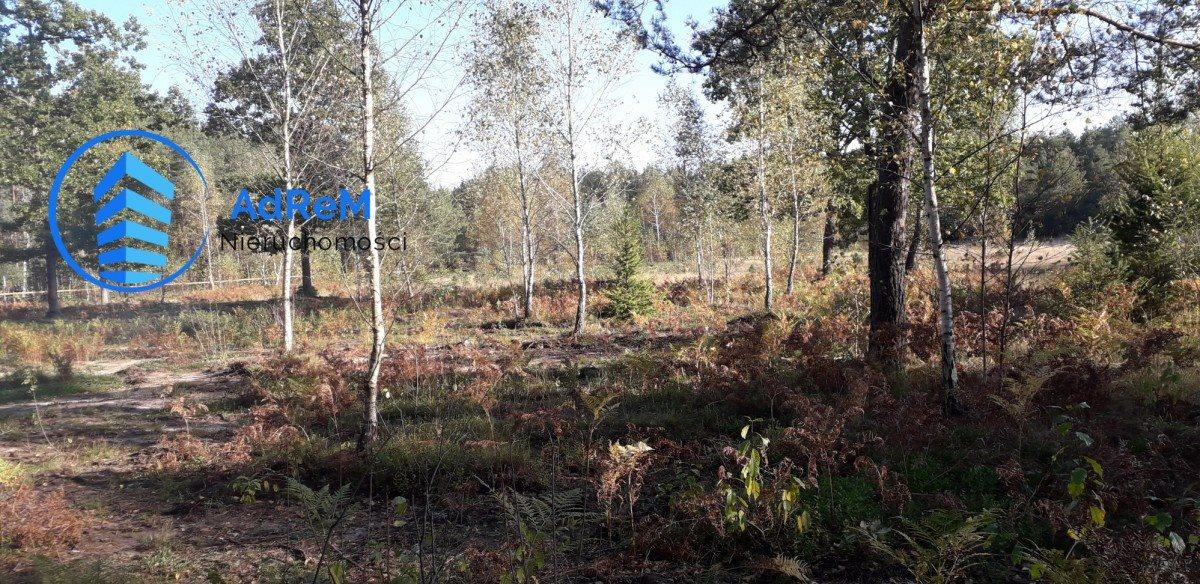 Działka rolna na sprzedaż Pańki  21000m2 Foto 3