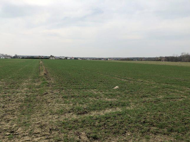 Działka rolna na sprzedaż Połomia  10300m2 Foto 8