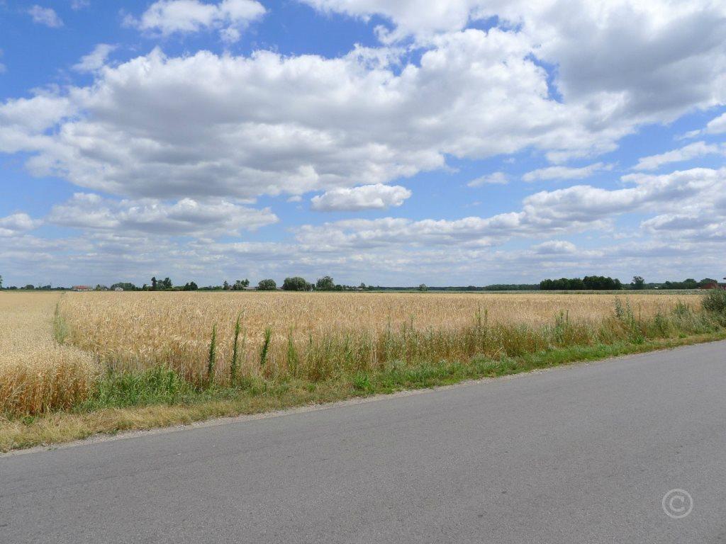 Działka budowlana na sprzedaż Wola Mąkolska  5891m2 Foto 3