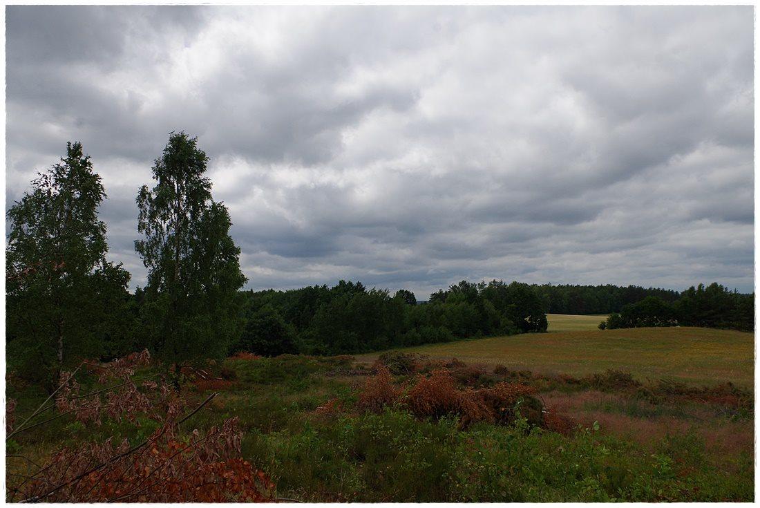 Działka rolna na sprzedaż Linia, Dębowa  12607m2 Foto 6