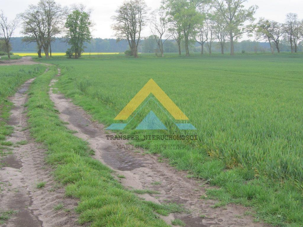 Działka siedliskowa na sprzedaż Choszczno  3090m2 Foto 4