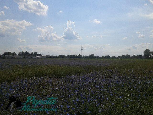 Działka przemysłowo-handlowa na sprzedaż Swarzędz, Zalasewo  22300m2 Foto 10