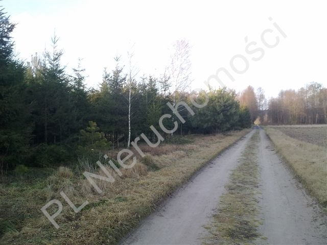 Działka rolna na sprzedaż Grzegorzewice  8000m2 Foto 1
