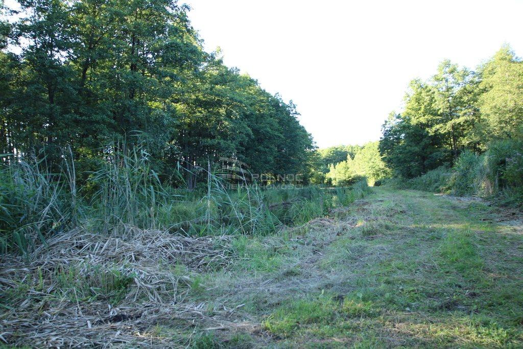 Działka leśna na sprzedaż Daniszewo  7000m2 Foto 4