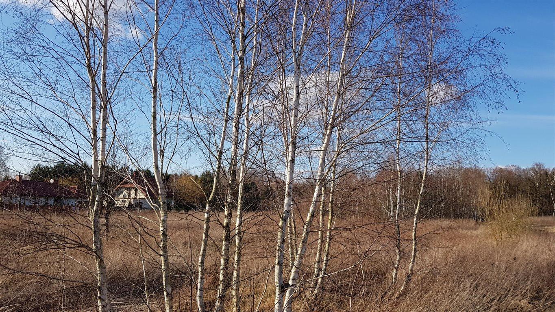 Działka budowlana na sprzedaż Michałówek  3349m2 Foto 7