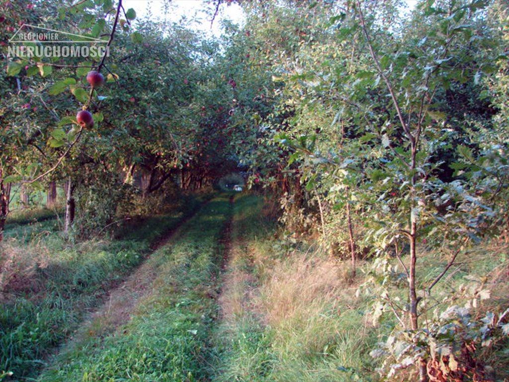 Działka rolna na sprzedaż Liksajny, Liksajny  8657m2 Foto 12