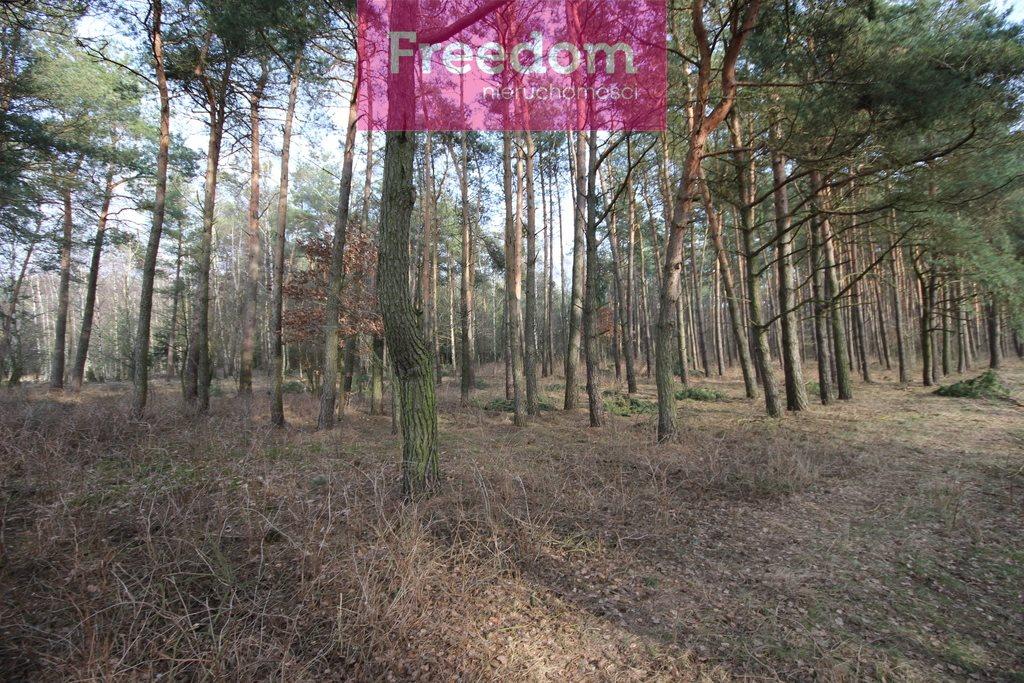 Działka leśna na sprzedaż Zielkowo  32200m2 Foto 2
