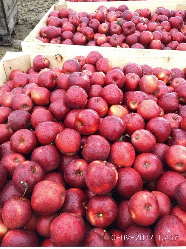 Działka gospodarstwo rolne na sprzedaż Korzenna  114m2 Foto 5