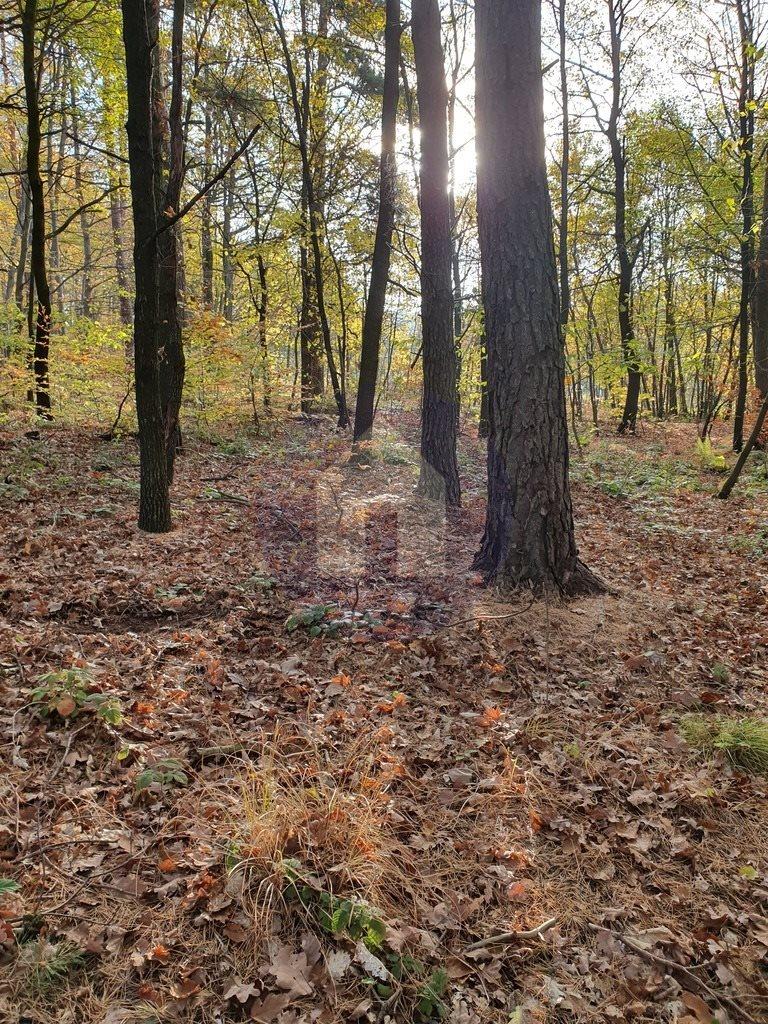 Działka leśna na sprzedaż Sobótka, Przełęcz Tąpadła  2551m2 Foto 3