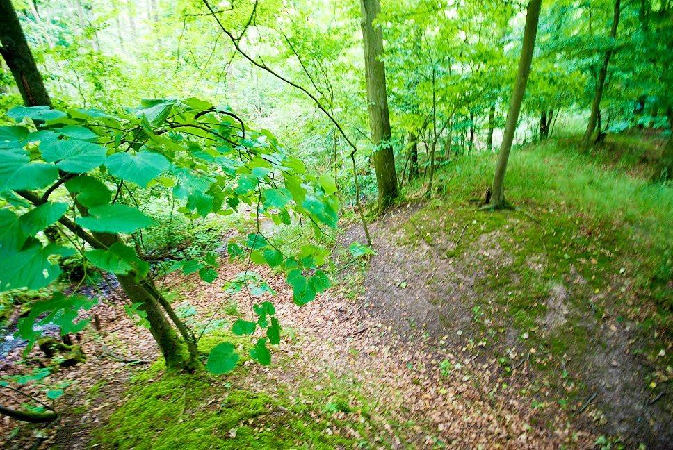Działka leśna na sprzedaż Grodzanów  46000m2 Foto 12