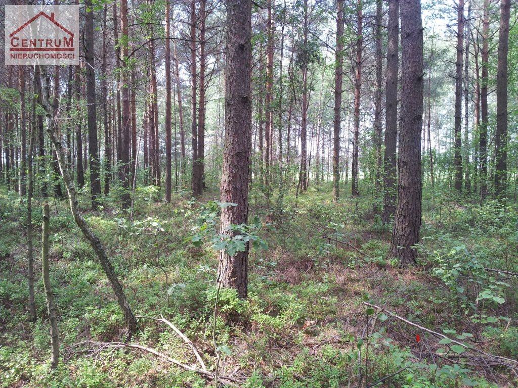 Działka leśna na sprzedaż Brzozowy Kąt  15375m2 Foto 3