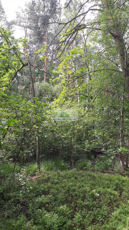 Działka leśna na sprzedaż Warszawa, Wawer, Międzylesie, Torfowa  3456m2 Foto 7