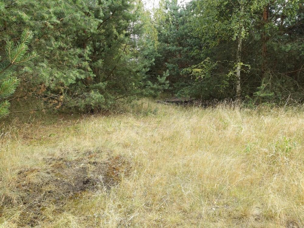 Działka inna na sprzedaż Dąbrówka Kościelna, Osiedle Leśne  2000m2 Foto 5