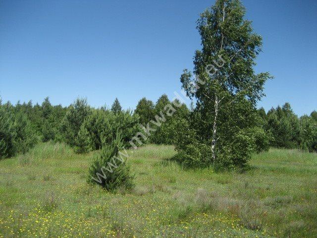 Działka rolna na sprzedaż Grzegorzewice  2000m2 Foto 1
