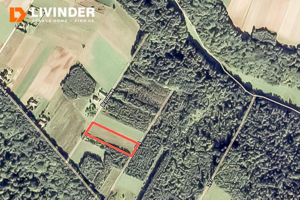 Działka rolna na sprzedaż Wielmoża  5515m2 Foto 4