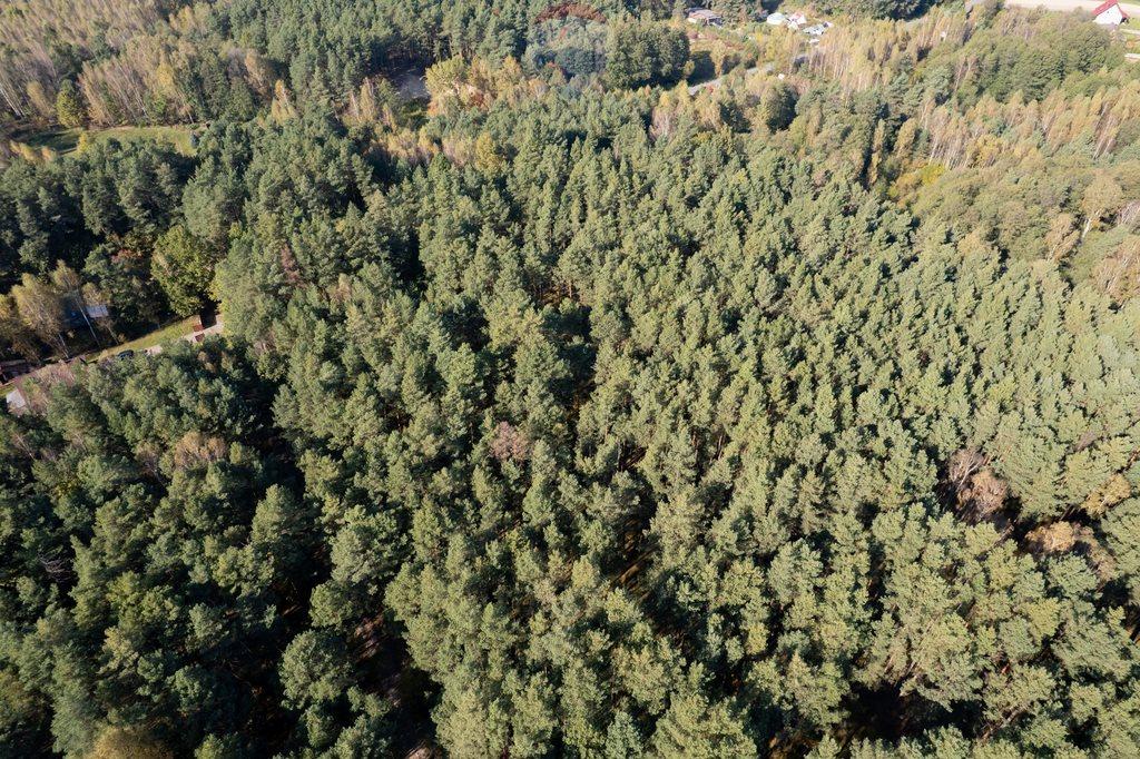 Działka leśna z prawem budowy na sprzedaż Czarnówka  15000m2 Foto 4