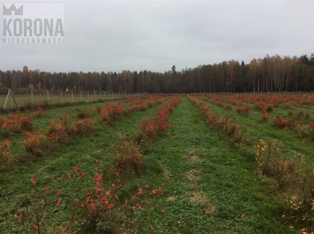 Działka rolna na sprzedaż Pasieki, Babia Góra  13300m2 Foto 12