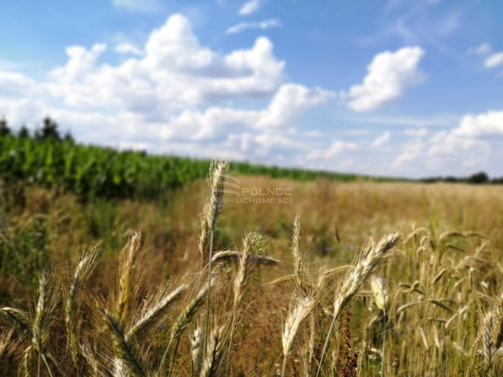 Działka rolna na sprzedaż Szydłów  1800m2 Foto 5