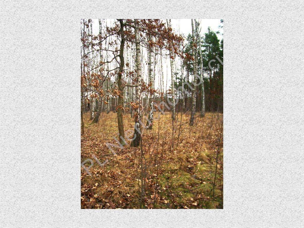 Działka leśna na sprzedaż Stefanowo  1900m2 Foto 5