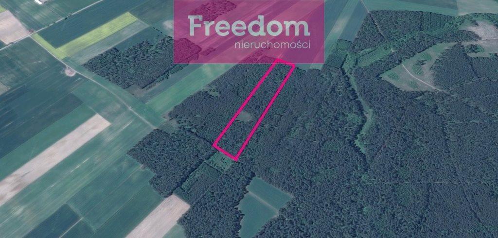 Działka leśna na sprzedaż Zielkowo  32200m2 Foto 10
