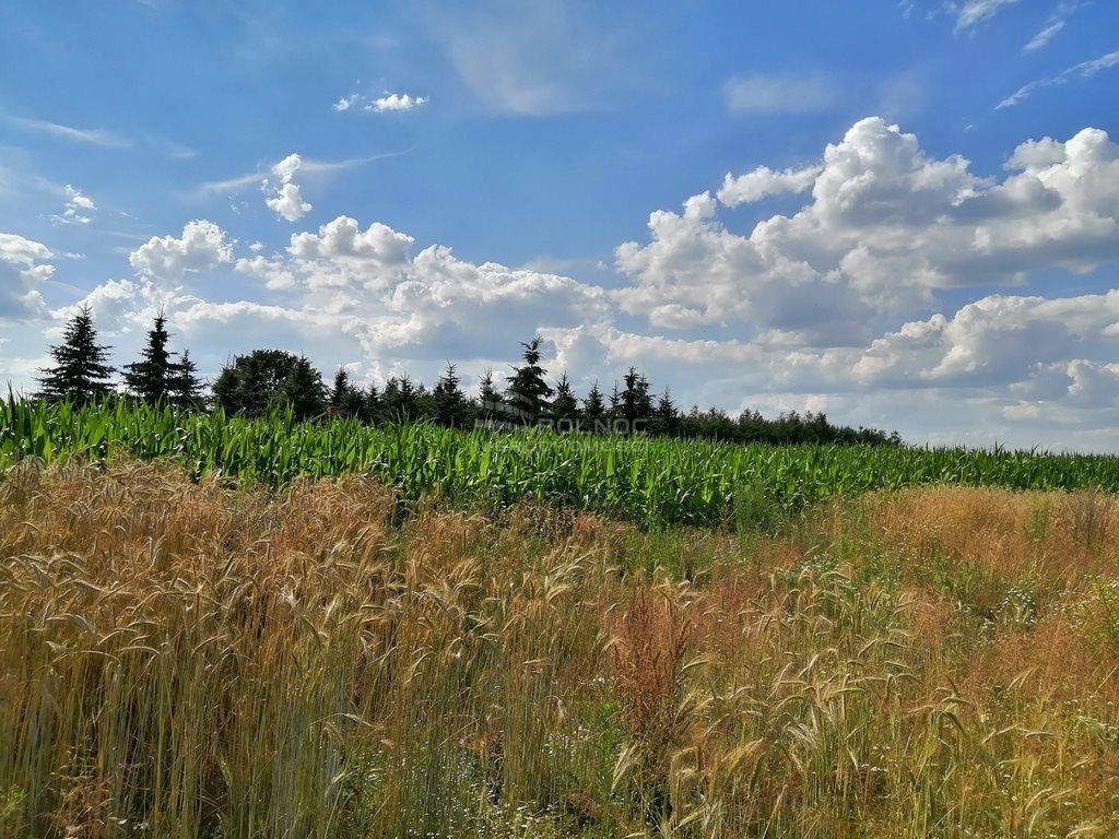 Działka rolna na sprzedaż Szydłów  1800m2 Foto 4