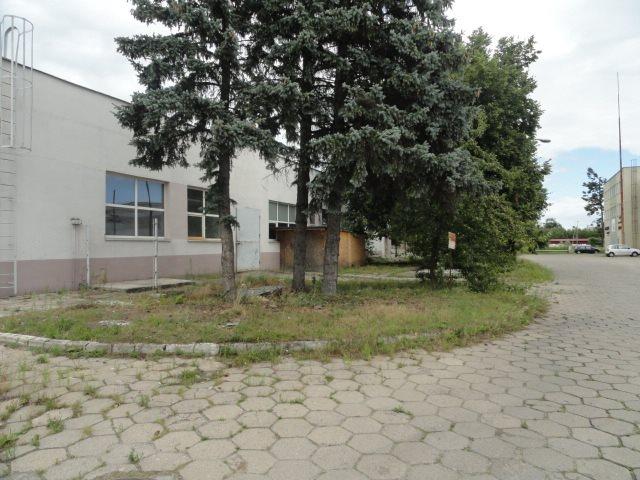 Lokal użytkowy na sprzedaż Elbląg, Rybna  579m2 Foto 7