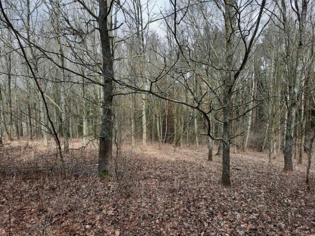 Działka leśna na sprzedaż Grądzkie  1404m2 Foto 6