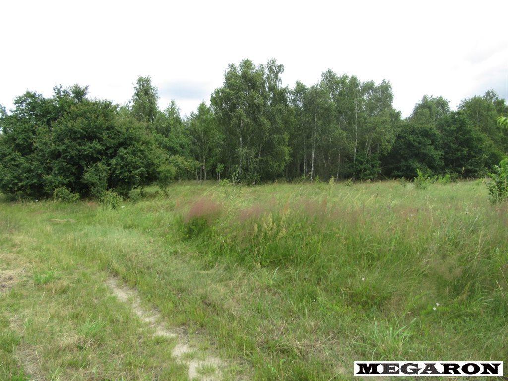 Działka leśna na sprzedaż Rzerzęczyce  25401m2 Foto 5