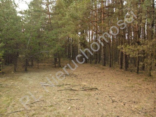 Działka leśna na sprzedaż Dobre  4200m2 Foto 2