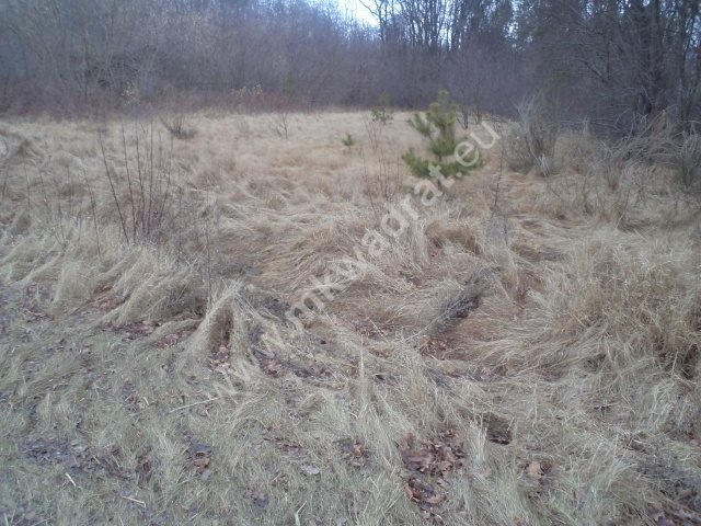 Działka leśna na sprzedaż Raducz  8600m2 Foto 7