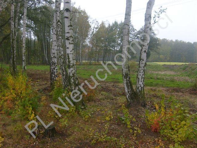 Działka rolna na sprzedaż Stare Budy  4239m2 Foto 2