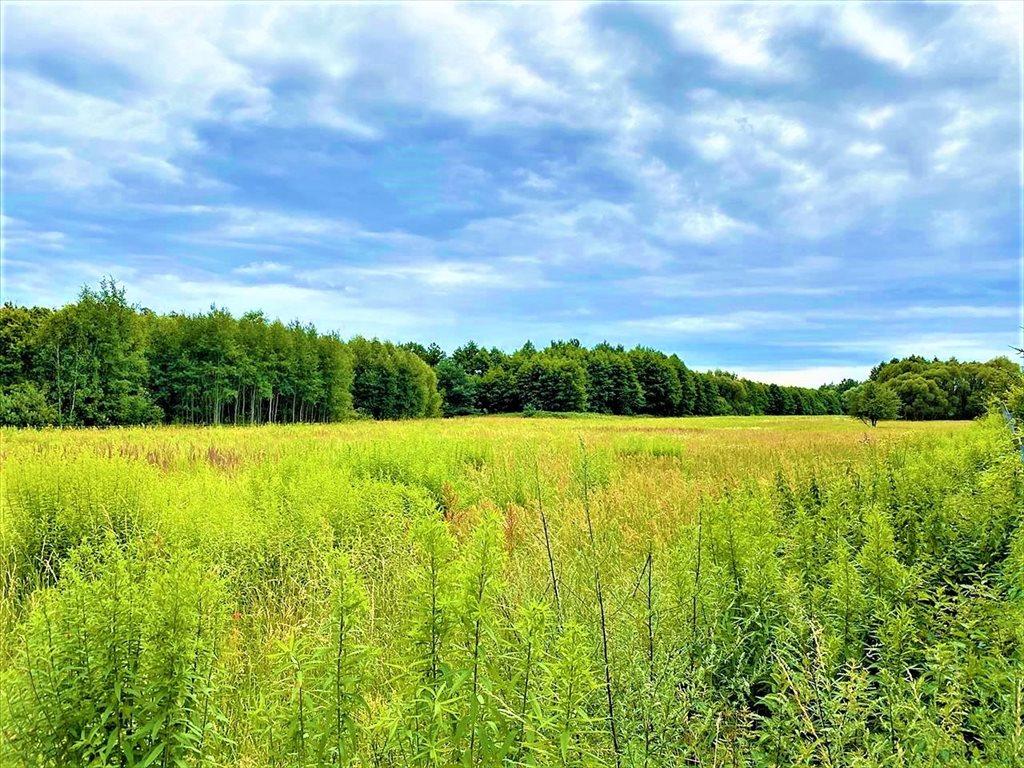 Działka rolna na sprzedaż Stare Budy Radziejowskie, Radziejowice  32300m2 Foto 6