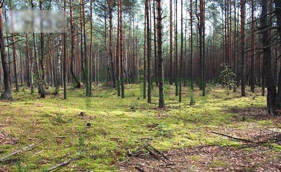 Działka leśna na sprzedaż Warszawa, Wawer, Radość  1837m2 Foto 2