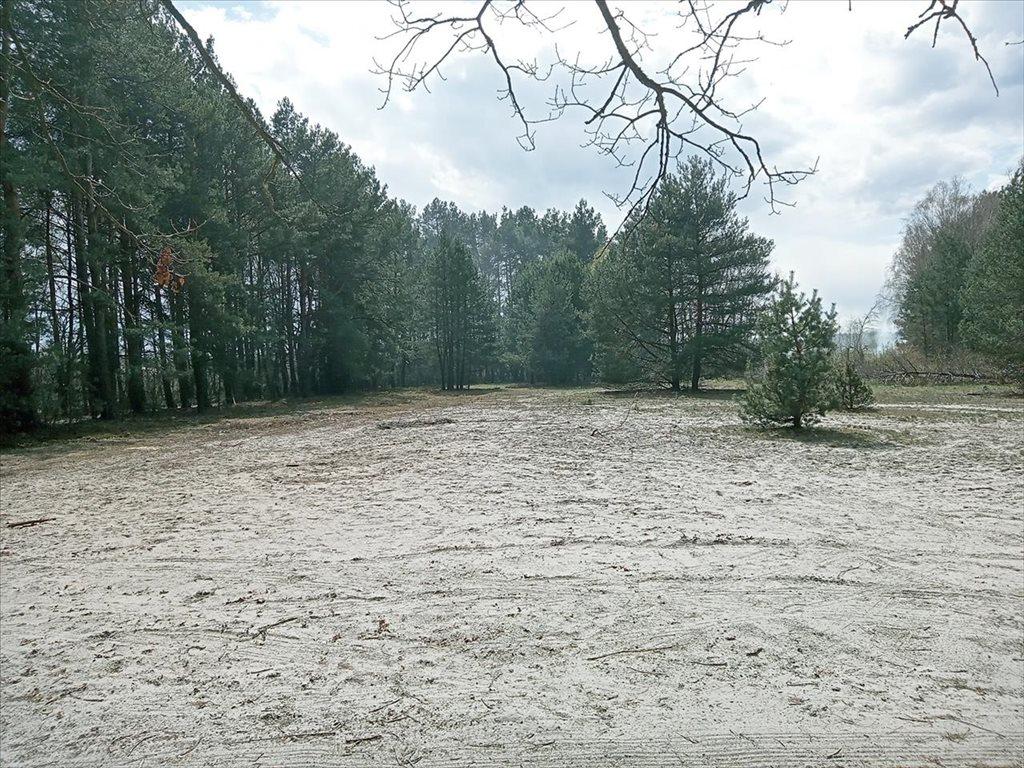 Działka rolna na sprzedaż Wola Karczewska, Wiązowna  6000m2 Foto 7
