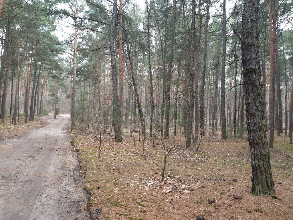 Działka leśna z prawem budowy na sprzedaż Sękocin-Las  2100m2 Foto 1