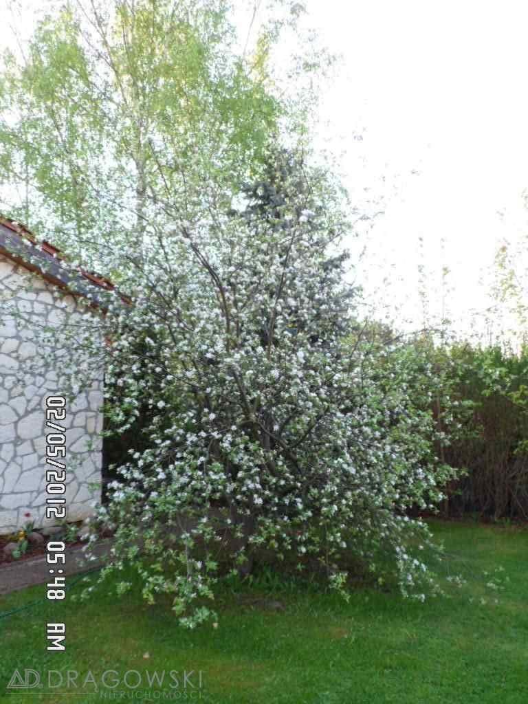 Dom na sprzedaż Sulejówek  220m2 Foto 9