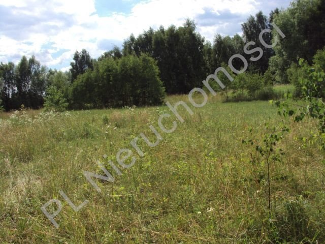 Działka rolna na sprzedaż Holendry Baranowskie  4000m2 Foto 4