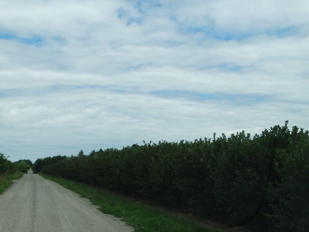Działka rolna na sprzedaż Skrobów  10600m2 Foto 4