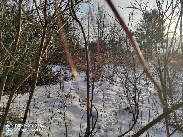 Działka budowlana na sprzedaż Strzeniówka  2000m2 Foto 1