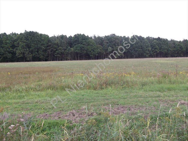 Działka rolna na sprzedaż Grzegorzewice  4193m2 Foto 1