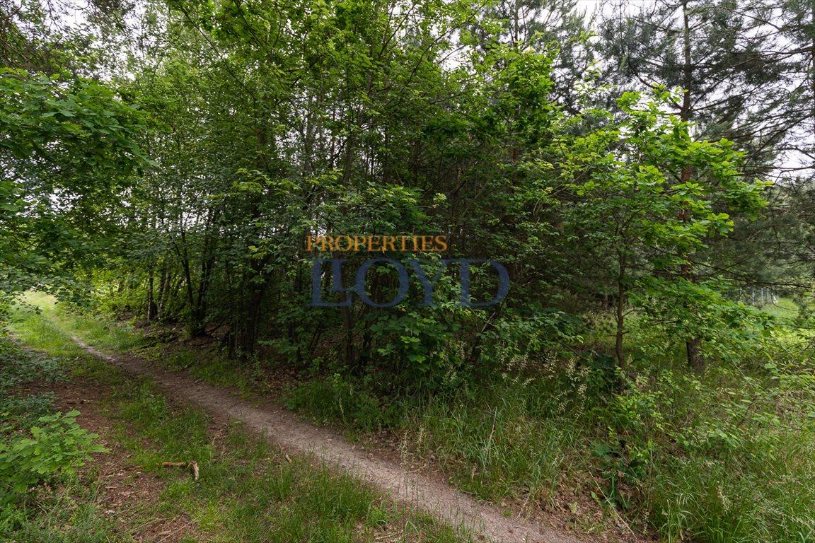 Działka rolna na sprzedaż Kociołki, Kociołki  3229m2 Foto 7
