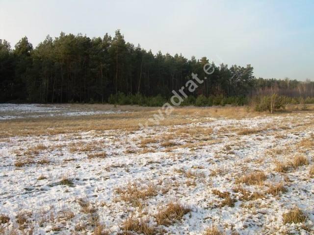 Działka rolna na sprzedaż Stanisławów  3000m2 Foto 8