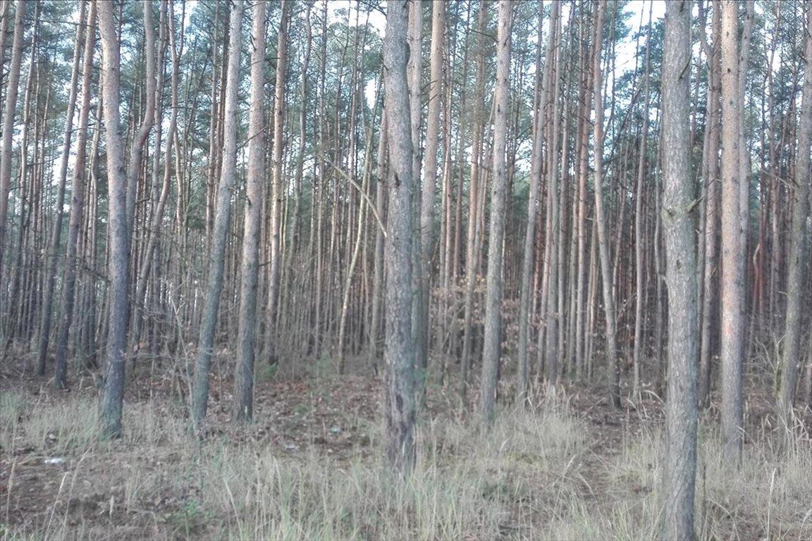 Działka leśna z prawem budowy na sprzedaż Piaseczno  2000m2 Foto 1